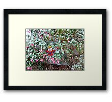 The Fuschia Fairy Framed Print