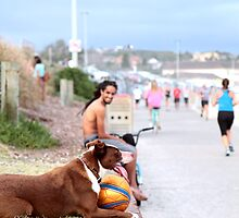 Bondi soccer dog by SharronS