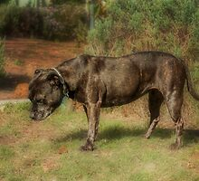 Mandy's Hang Dog Look by Elaine Teague