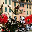 Flowers in Portofino - Italy by Arie Koene