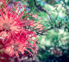 Grevillea Flower by Monosquid