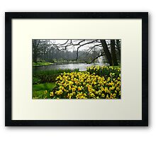 Daffodils in the Keukenhof Framed Print