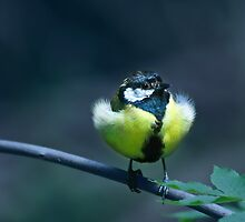Bird by Care Johnson
