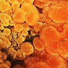 Sweet Poison (Mimetite) by Stephanie Bateman-Graham