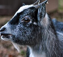 Goat by Care Johnson