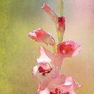 Candy Cane Gladiolas by Kathilee