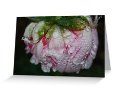 Water On Peony  Greeting Card