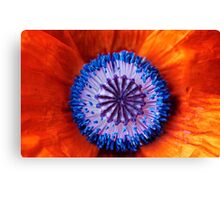 Now My Beauties Poppies Poppies Canvas Print
