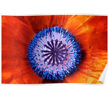 Now My Beauties Poppies Poppies Poster
