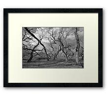 Tree people Framed Print