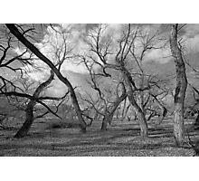 Tree people Photographic Print