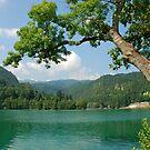 Island in lake Bled (Slovenia) by Arie Koene
