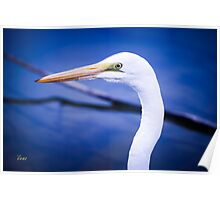 Egret Side View Poster