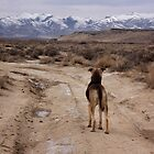 Mocha on The Road Less Traveled by teresalynwillis