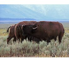 Buffalo Clan Photographic Print