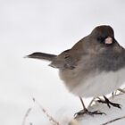 Winter Snow Bird 3 by michaelasamples