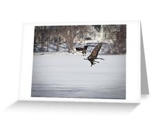 A Pair Of American Bald Eagles Greeting Card