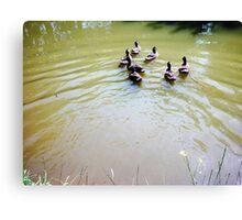 Ducks.  Canvas Print