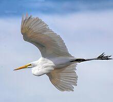 Graceful Flight by George I. Davidson