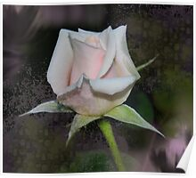 Rose Texture Poster