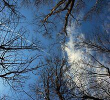 Looking Up by jodi payne