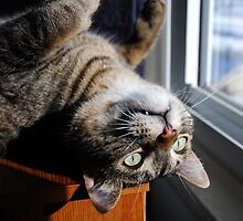 Looking Out Upside Down by jodi payne