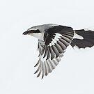 Full bore flight by jamesmcdonald