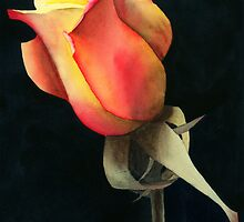 Rio Samba Rose by Ken Powers