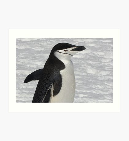 "Chinstrap Penguin ~ ""Ballroom Bound"" Art Print"
