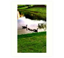 A Geese Family heading to shore Art Print