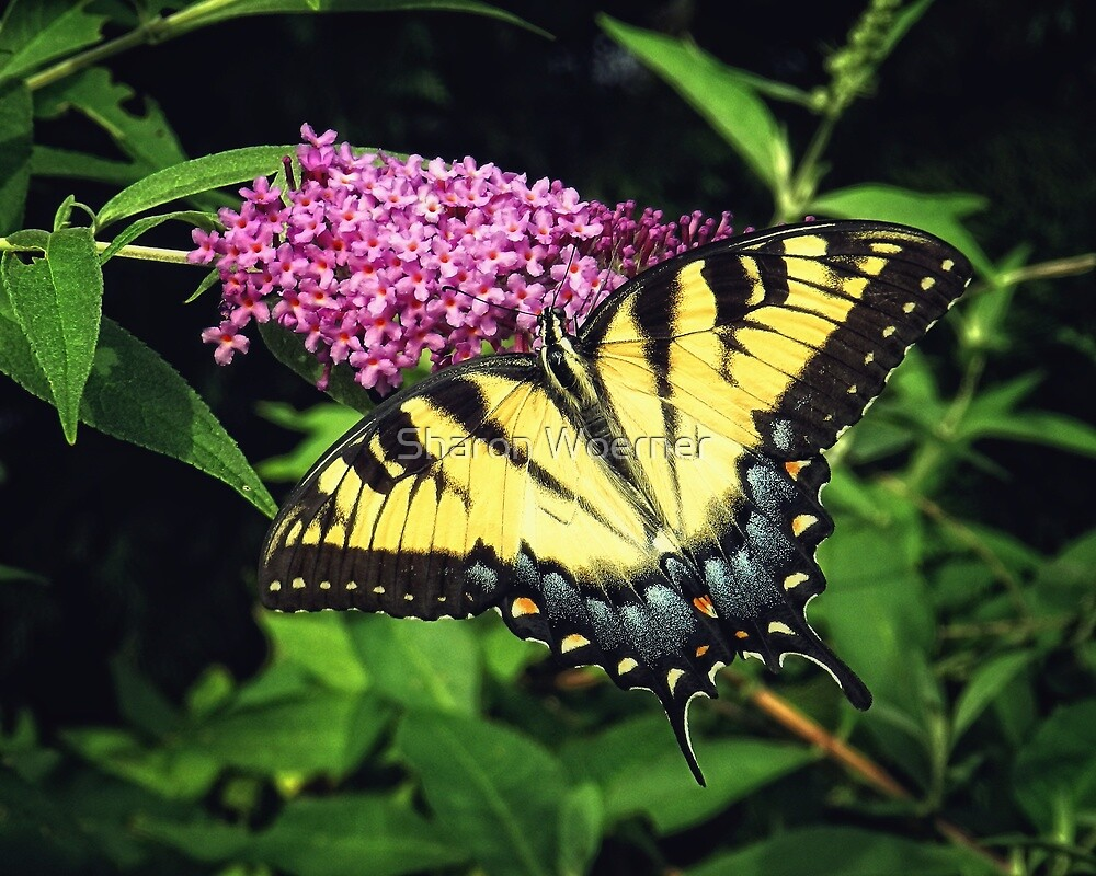 On Golden Wings by Sharon Woerner