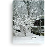 Tree Blooming With Snow Canvas Print