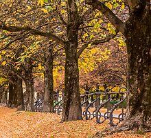 English Garden, Munich by Mark Bangert