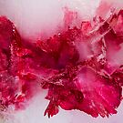 StucK in Ice (2)  by Nicole  Markmann Nelson