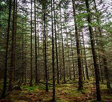Forest by Paulius Bruzdeilynas