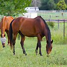 Grazing in the Green. by Vicki Childs