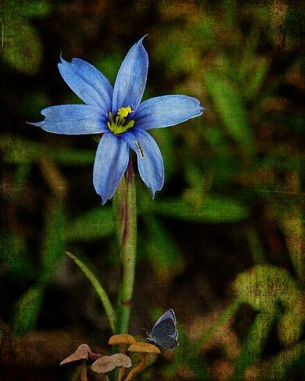 Wildflower Smiles by PineSinger