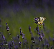 Butterfly paradise by mrLEV