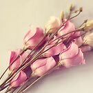 Dreamy Flowers  by Nicola  Pearson