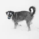Stray Dogs' Guide To Sochi 2014. by Alex Preiss