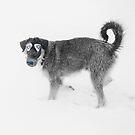 Stray Dogs' Guide To Sochi 2014. by Alex Preiss