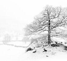 Winter Tree by Mark Hooper