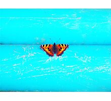 Butterfly- Unique Photography  Photographic Print