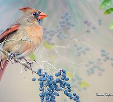 Female Cardinal and Wild Berries by Bonnie T.  Barry