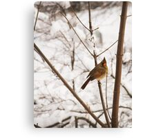 Lady Cardinal Canvas Print