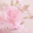 Romance by shalisa