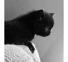 Soft As A Kitten Photographic Print