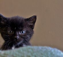 Little Baby Cattitude by Ladymoose