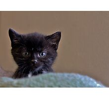 Little Baby Cattitude Photographic Print