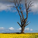 The Tree by Jeff  Wilson